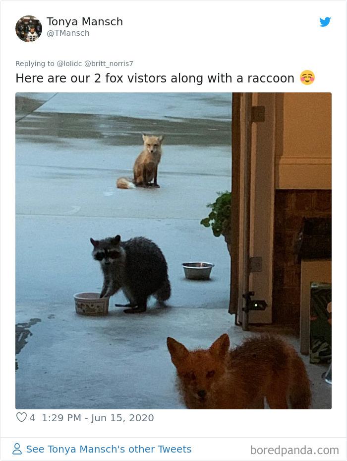 Garden-Fox-Pics
