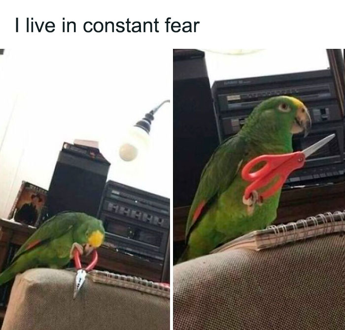 Fearbirb