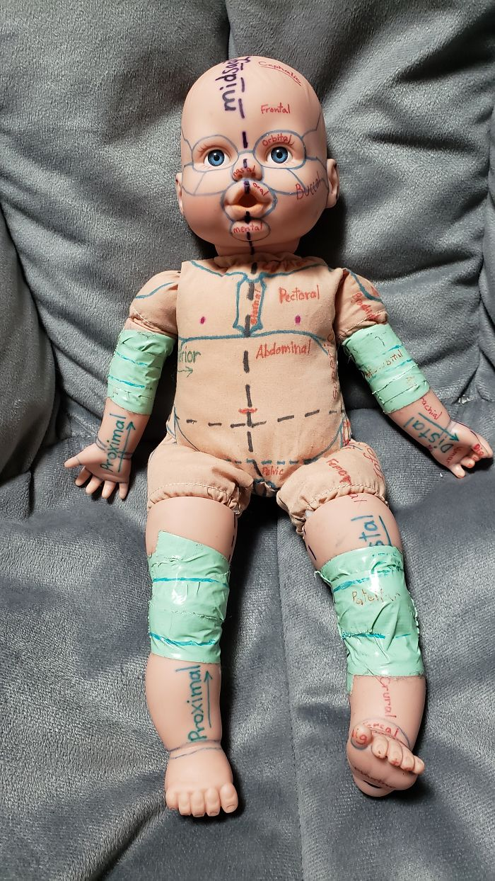 This Study Aide I Made For Anatomy Class. My Kids Named It Nightmare Fuel Baby