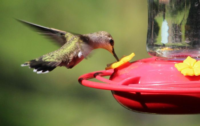 To Study Hummingbirds Up Close, This Man Attached Feeders To His Glasses