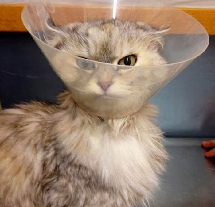 Funny-Pets-With-Cones