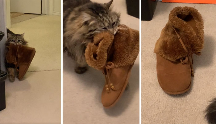 My Mom Adopted A Cat That Brings Her Slippers To Her Every Morning. I Didn't Believe Her Until She Got It On Camera Finally