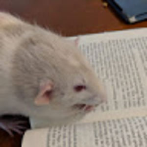 fatso ratso