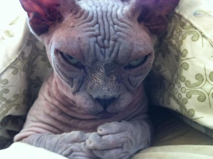 Meet Sinister Cat. Plotting To Take Over The World