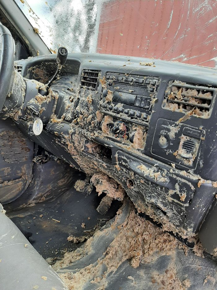 My Dad's Old Truck Got Hit By A Truck Carrying Old Rotten Potato Slurry To A Feed Lot For Cows. His Passenger Window Was Down