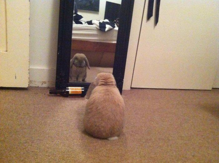 My Rabbit Does This Every Day. Not Sure What He's Thinking About…
