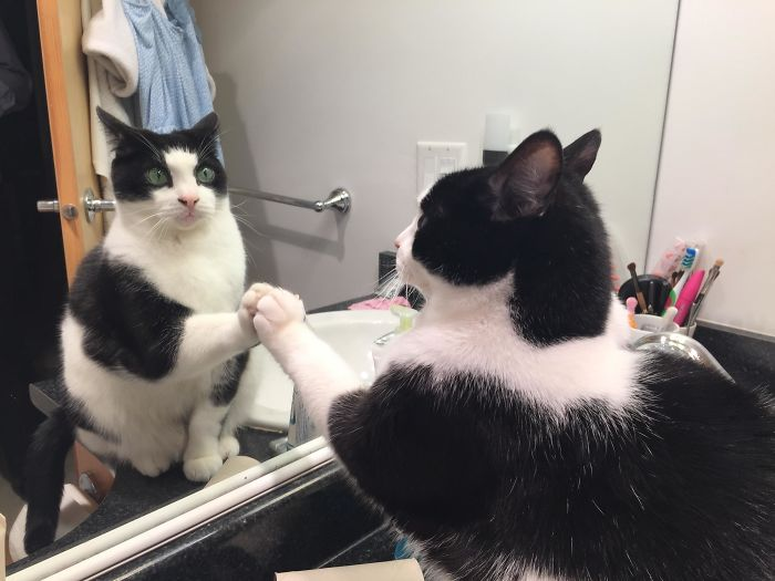 Daily Ritual To Connect With The Mirror Cat