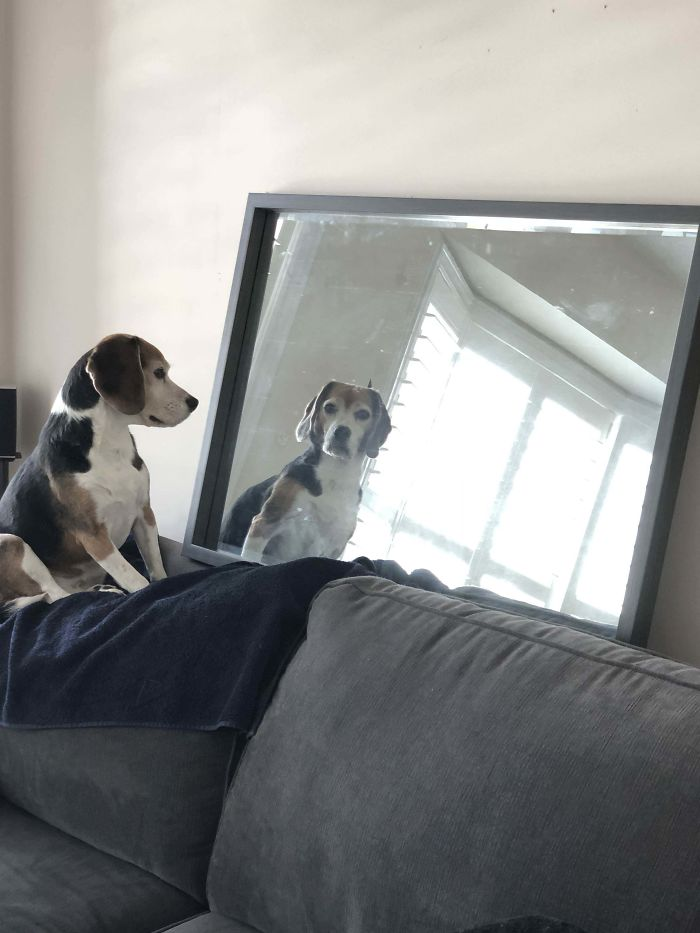 My Dog Likes To Stare At Me Through The Mirror.