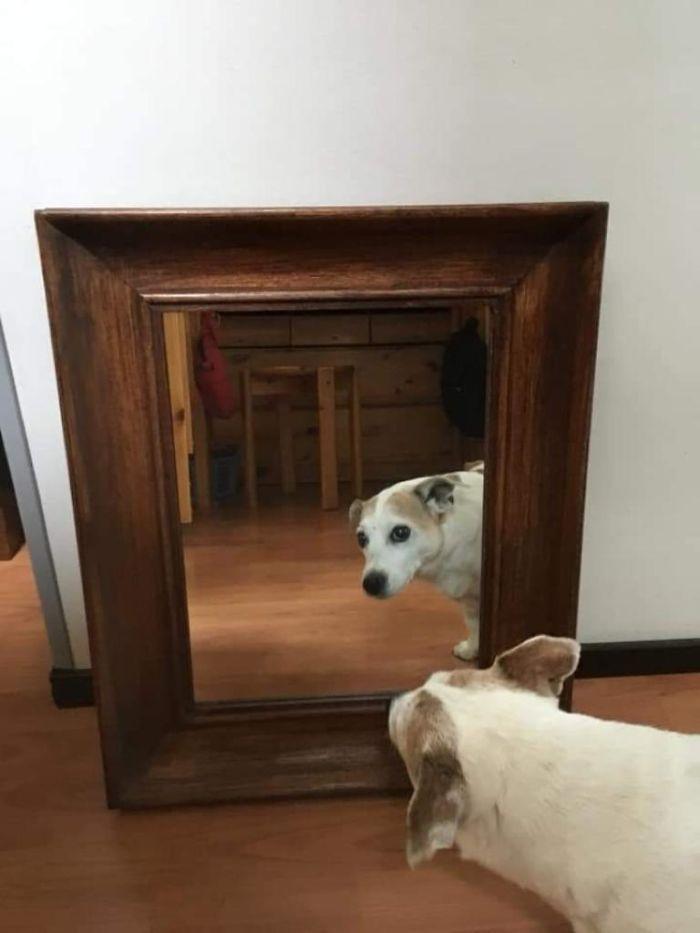 Reflective Boi