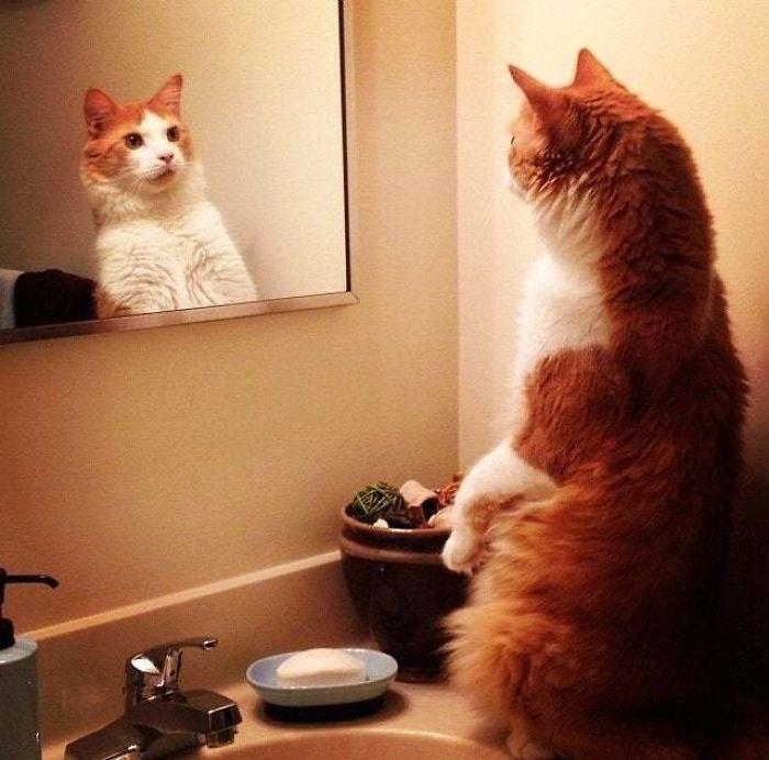 Standing Cat Looking In Mirror