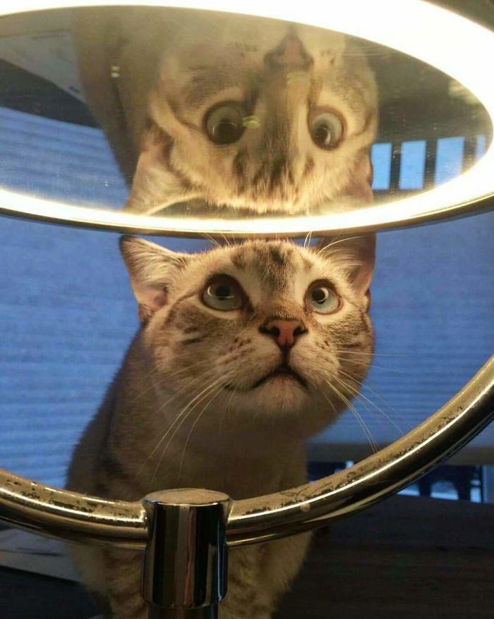 My Cat Thinks My Makeup Mirror Is Mesmerizing