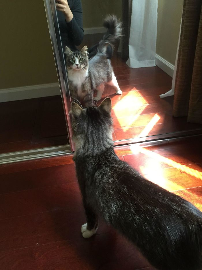 We've Been Feeding A Stray For A Few Weeks - Helped Himself To A Tour Of The House And Ended Up Getting Mesmerized By The Mirror