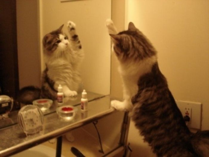My Kitty Looking At His Reflection In The Mirror.