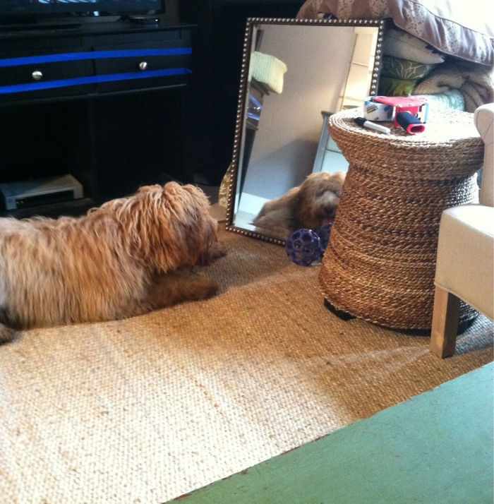 """My Dog Has Discovered Her First Mirror. She Keeps Rolling Her Ball To The """"Other Dog"""" And Whining Because She Wants To Play"""
