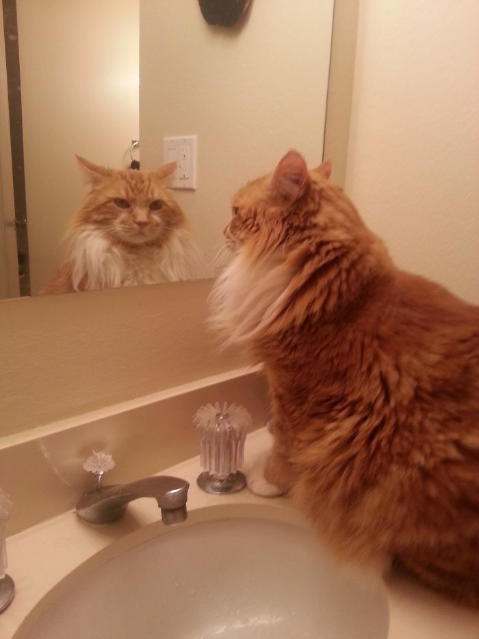 My Cat Checks Himself Out In The Mirror Everyday