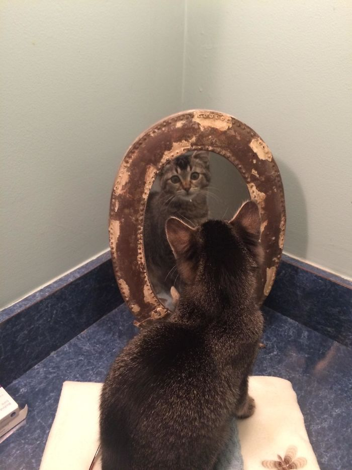 Our Little 4-Month Old Phoebe Discovered Herself In The Mirror.