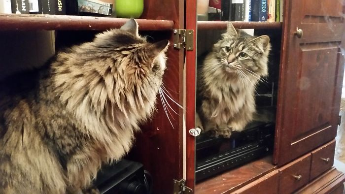 When She Looks Into The Mirror, All She Sees Are Claws And Impurrfections.
