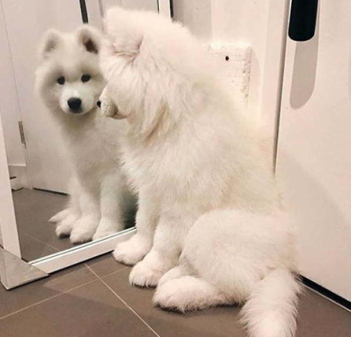 Mirror Mirror Who Is Cutest White Cloud?