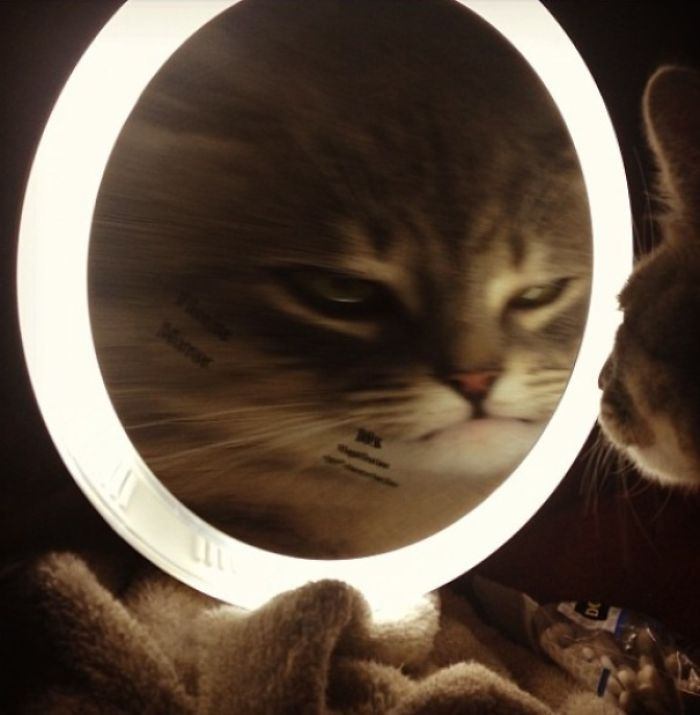 I Forgot To Turn My Magnifying Mirror Off Last Night Before I Left The House. Came Home To This Little Situation. Meet Roscoe.