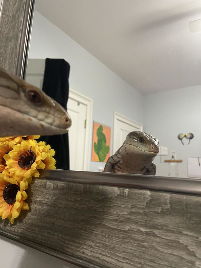 Mirror Mirror On The Wall, Who's The Pretties Skink Of All?