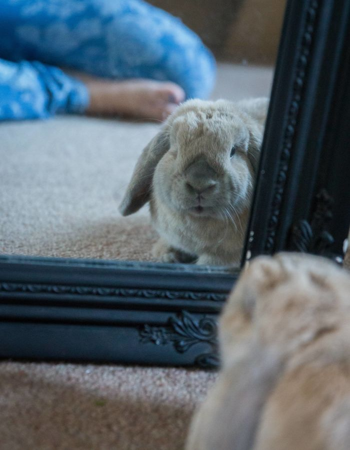 My Rabbit Really, Really Likes Looking At Himself In The Mirror.