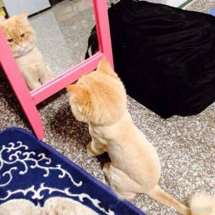 He Kept Looking Into The Mirror For Quite A While, Seems Really Depressed About The New Look After Shaving.
