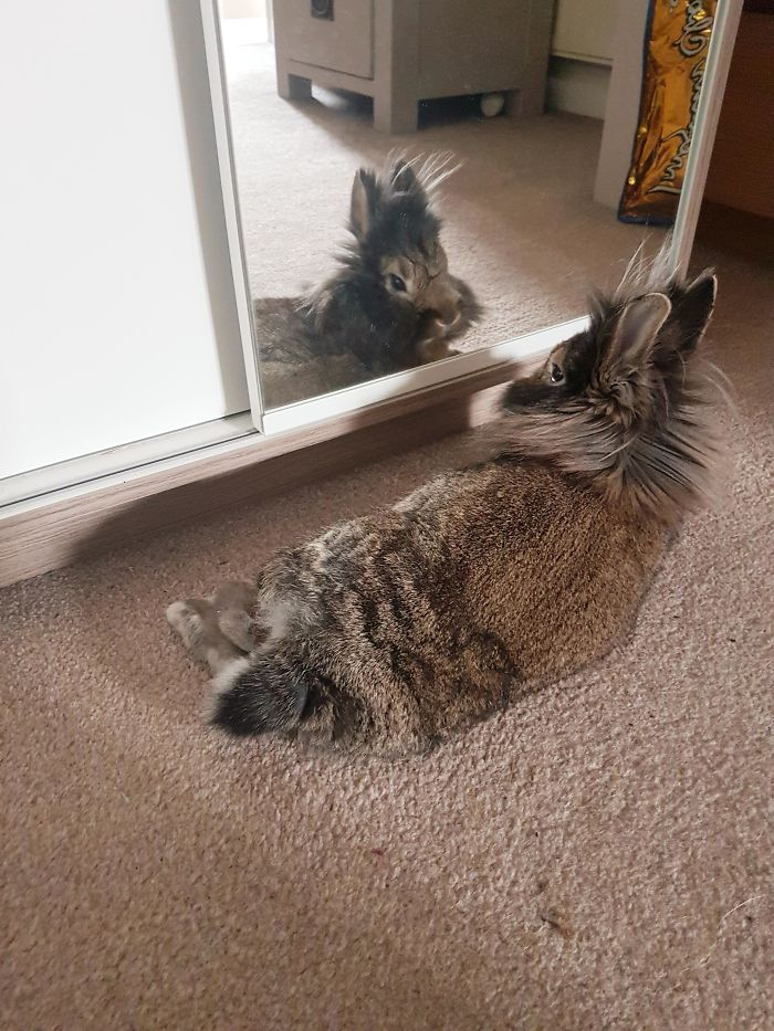 Mirror Mirror On The Wall, Who's The Handsomest Bun Of All?