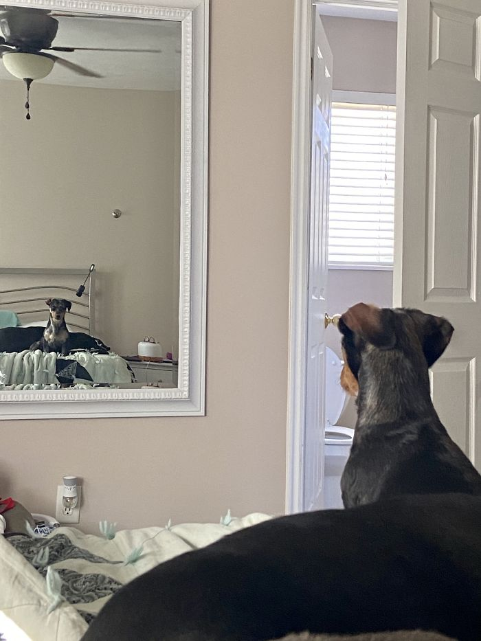 Doin A Protecc From The Heckin Floof In The Mirror. She Growls At Herself At Least Once A Day