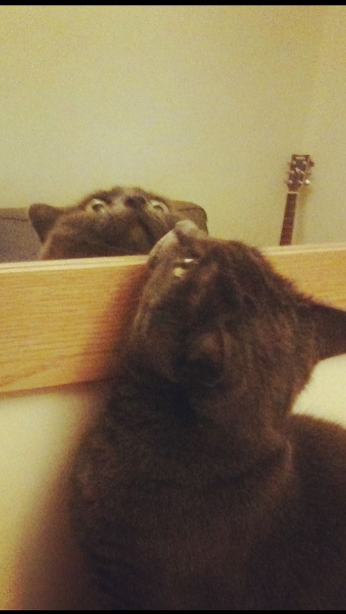 She Was Confused By The New Mirror. (Apologies For Potato Quality)
