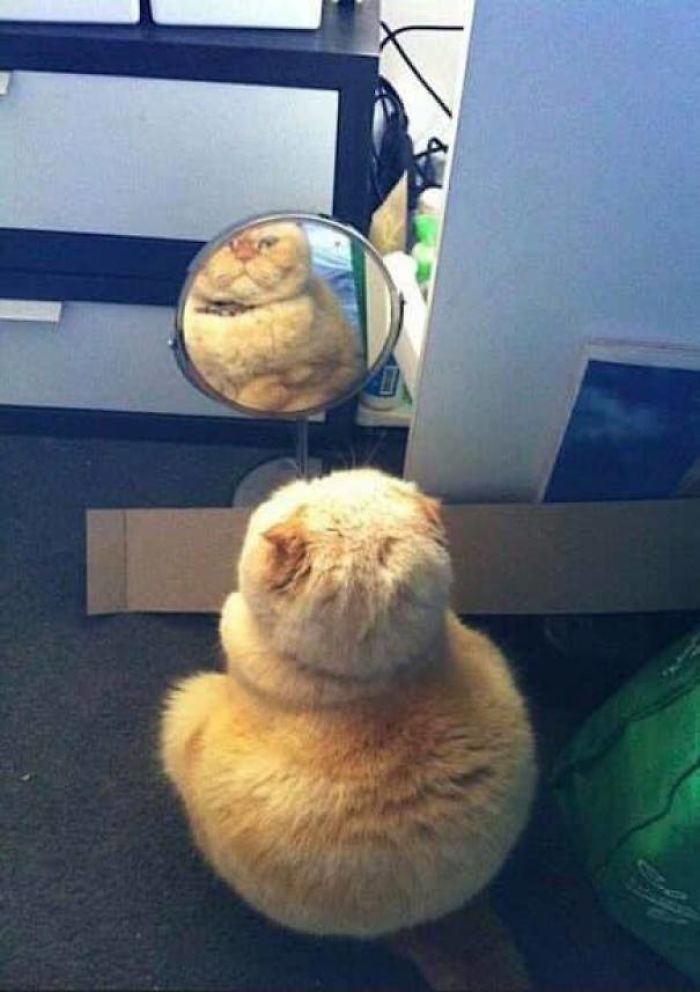 Mirror Mirror On The Wall... Who Is The Fattest Of Them All?