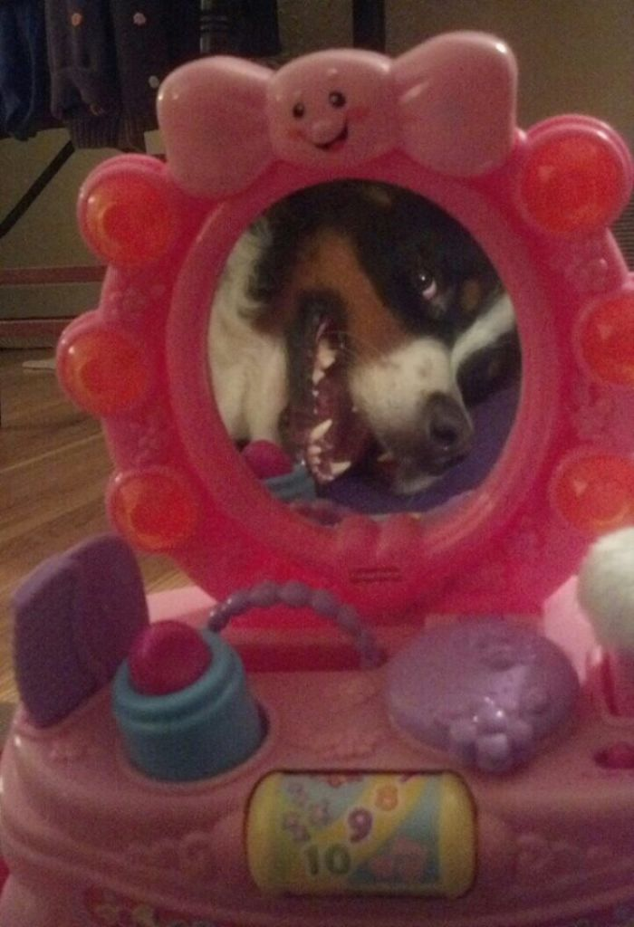 My Dog Looking Into A Vanity Mirror.......he Was Honing In On My Grand Daughters New Toy. Look At Me!