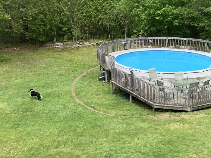 My Dog Runs Around My Pool In The Exact Same Track So Much That There's A Ring Of Dirt In The Grass