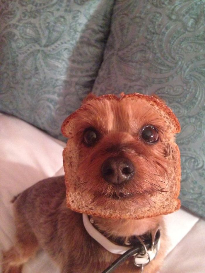 A Rare Picture Of An Inbread Dog