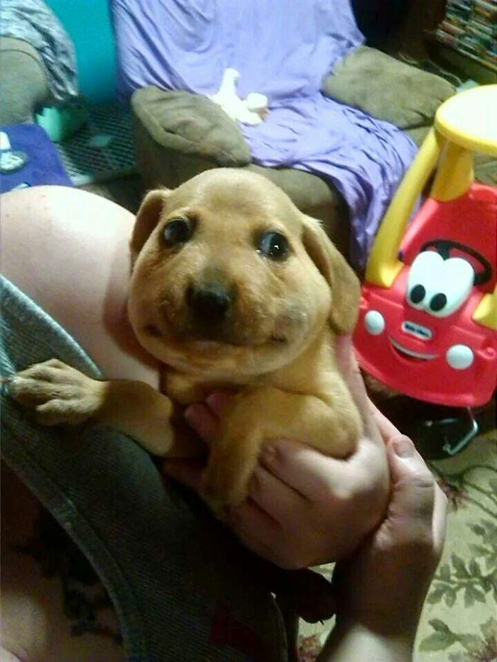 My Friend's Dog Ate A Bee