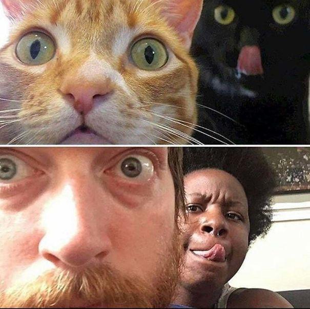 Like Cat, Like Human