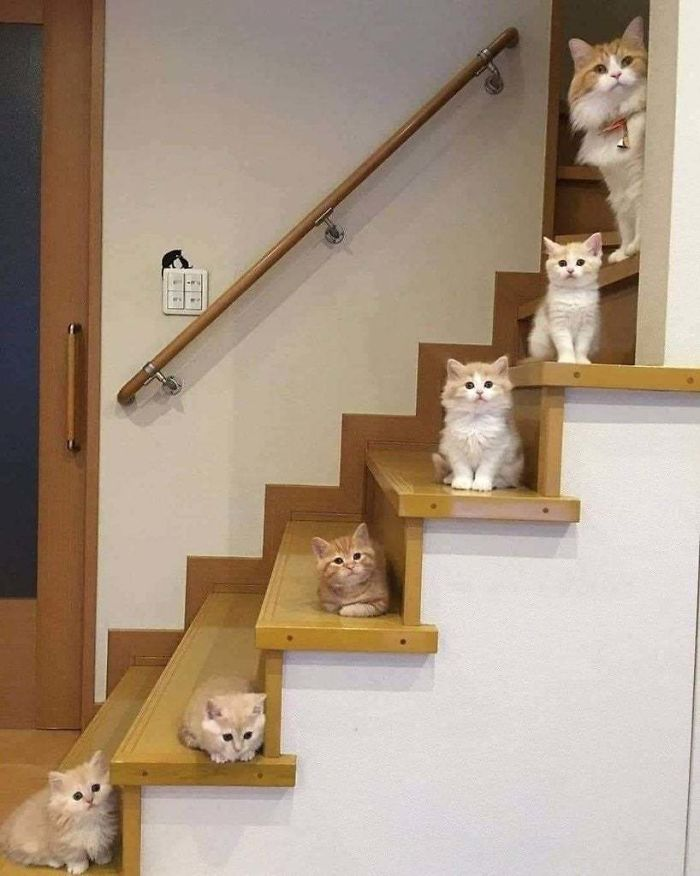 Even Smol Cats Get A Step