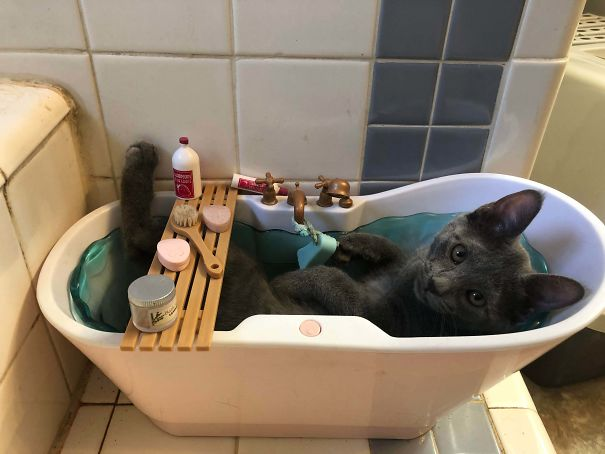 One Of Our Kittens Only Sleeps In My Daughters Doll Bathtub...