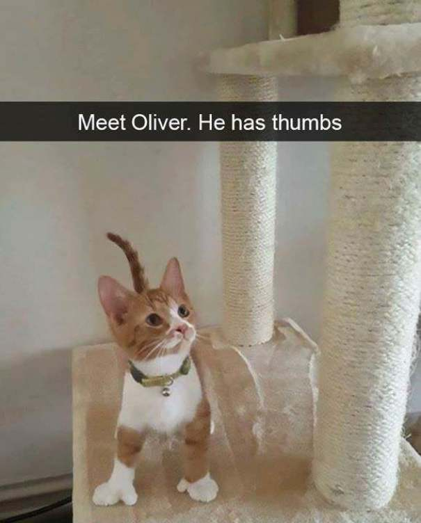 Oliver,the Cat With Thumbs.