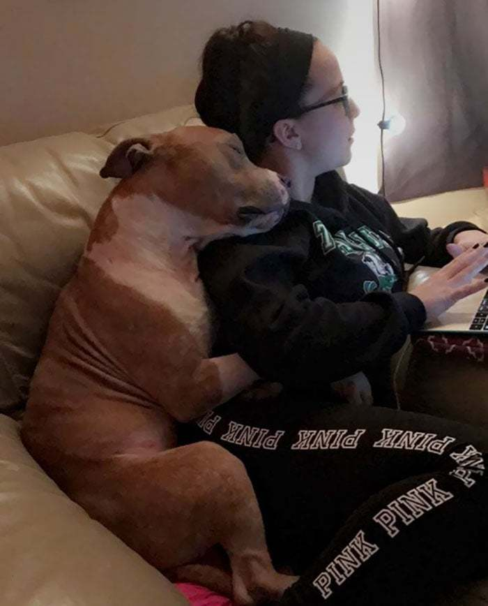 Adopted Pit Can't Stop Hugging His New Owner