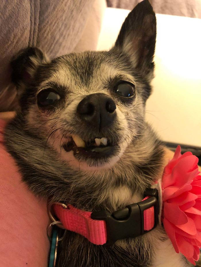 Drove 2260 Miles To Adopt This Little Sweetie, And It's The Best Thing I Have Ever Done. Reddit, Meet 10 Year Old Billie