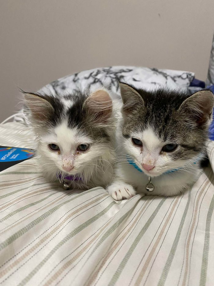 Adopted These Babies Yesterday. They Were Scared All Of Yesterday But I Woke Up And Found Them Sitting Like This Beside Me