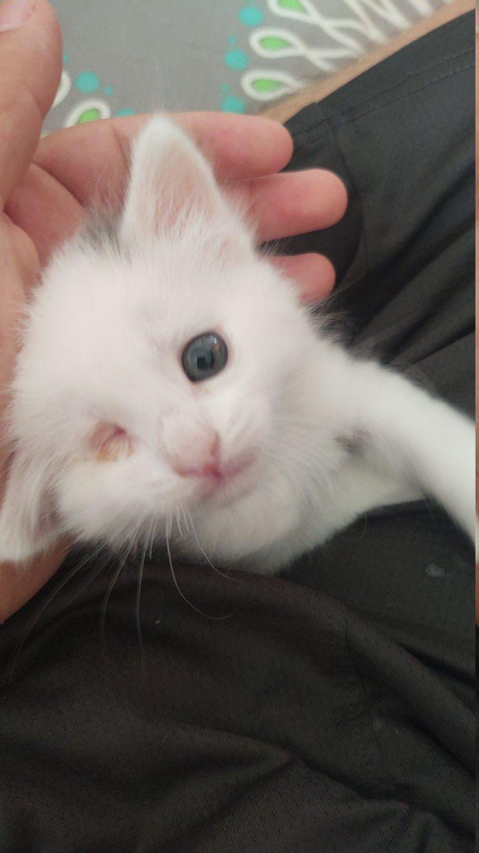 A Friends Kitten He Rescued Recently