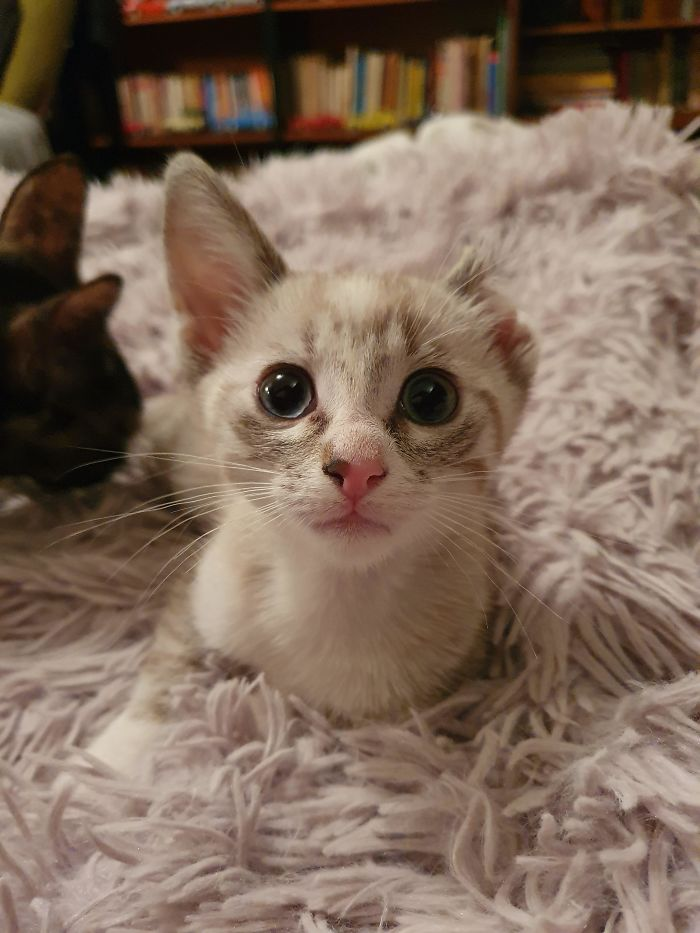 Daisy, The Kitten Nobody Adopted Because Of Her Ear