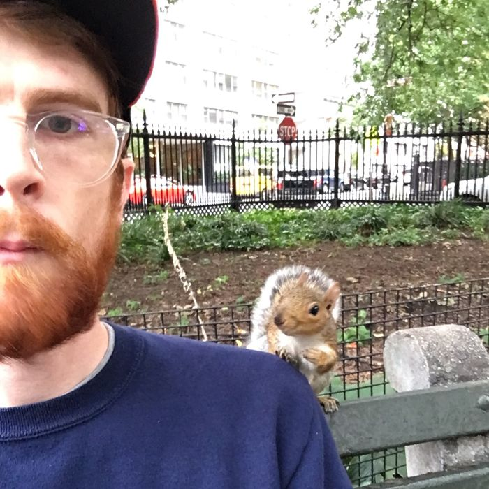 """New York Squirrels Will Just Tap You On Your Shoulder And Ask """"You Gonna Finish That?"""""""