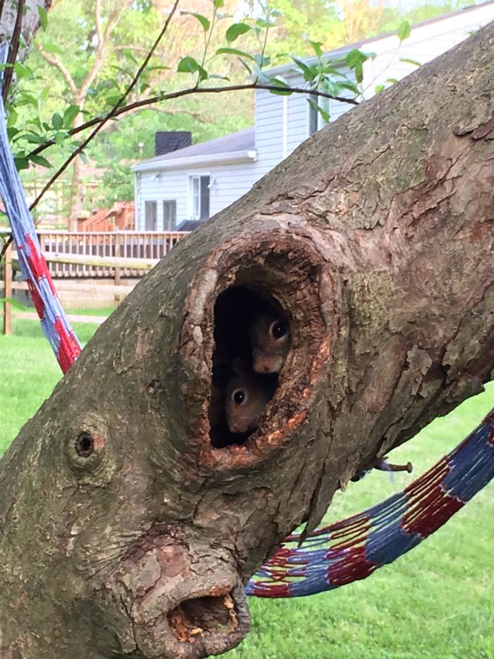 A Family Of Squirrels Moved Into The Hole In My Tree