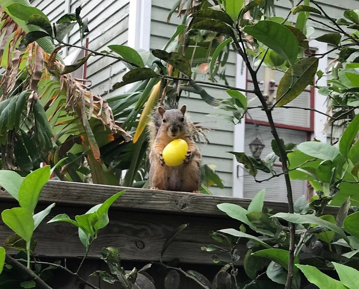 This Squirrel Found An Easter Egg