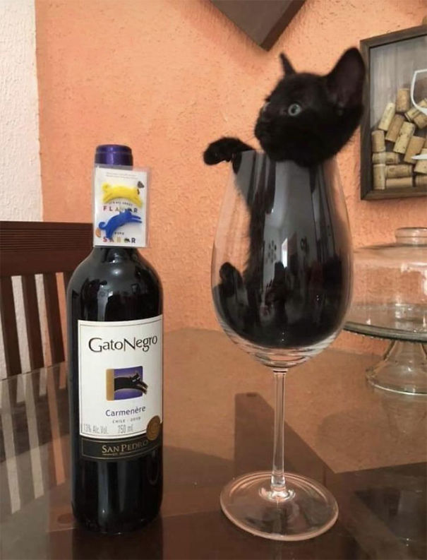 """Black Cat"" Is The Name Of The Wine"