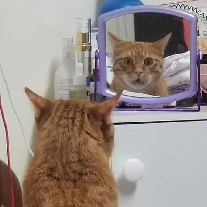 Looking In The Mirror