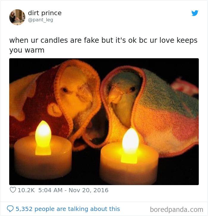 Cozy Blanket Birbs