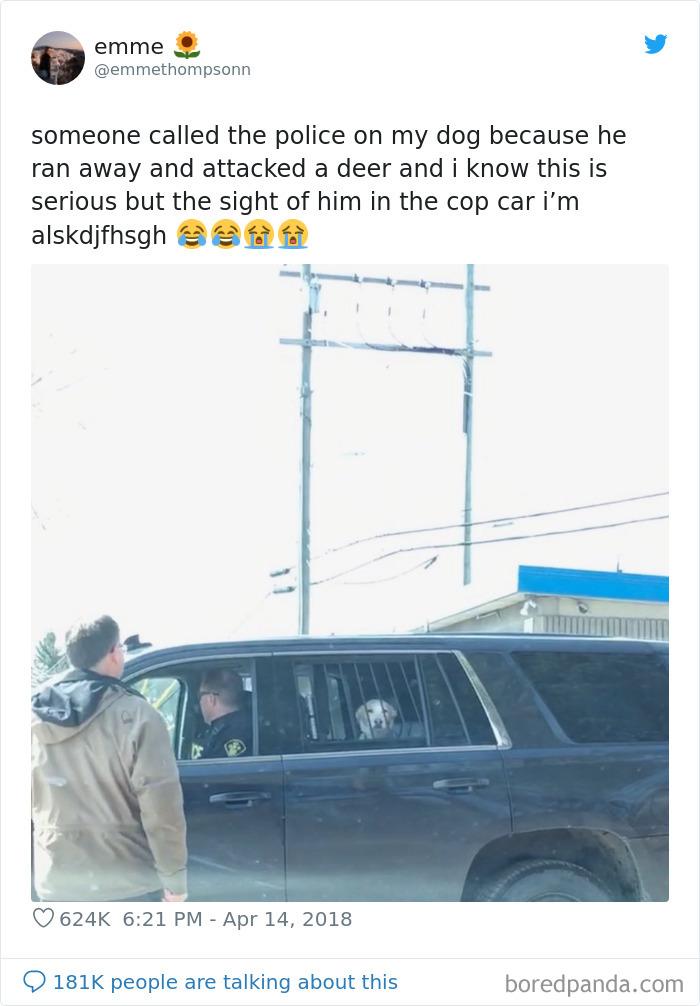 Doggo Arrest